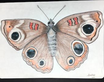 Autumn Moth colored pencil illustration
