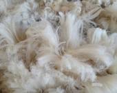 Nupp - a Moorit CVM Romeldale x Cormo raw fleece - hand spinners, knitters, felt or dye