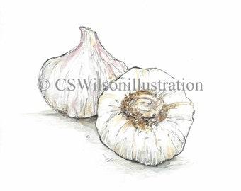 Garlic - Fine Art Print