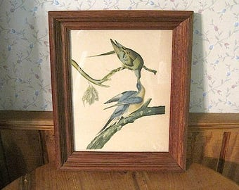 Framed Antique Bird Print