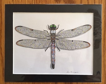 Hand Drawn Great Blue Skimmer Dragonfly 8 x 10