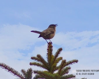 """Signed Original Photograph """"TREE TOP SONG"""" ∎ Print With Mat ∎ Print Only"""