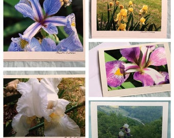 Set of 5 Iris Flower Note Cards / Blank Greeting Cards with Iris / Stocking Stuffer / Gift for Her / Tennessee State Flower / Gardener Gift