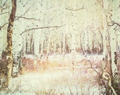 Light in the Winter Aspen - Canvas Gallery Wrap - No Frame Needed