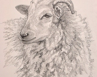 Sheep Drawing, Sheep Print, Sheep Art, Farm Animal Art, Farm Art Print, Farmyard Animal Print,  Den Art, Home Decor Wall Art by P. Tarlow