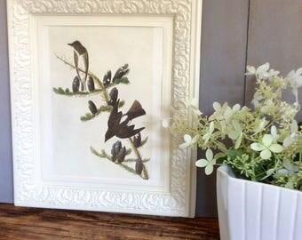 Vintage Audubon Bird Print / Plastic Frame /Embossed  Cream Picture Frame  / Framed Bird Print  / Decorative Framed Art