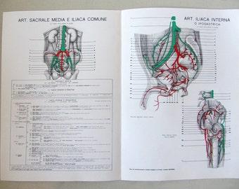 Vintage Italian Anatomy Table