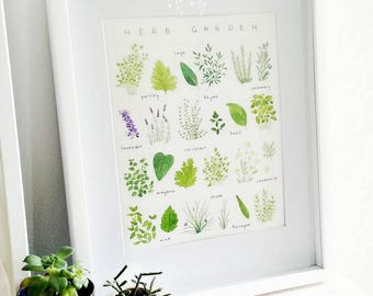 Herb Garden Species Chart - 8 x 10 Print - Giclee Canson Aquarelle Rag - Botanical Illustration - Perfect for the Kitchen and Chefs