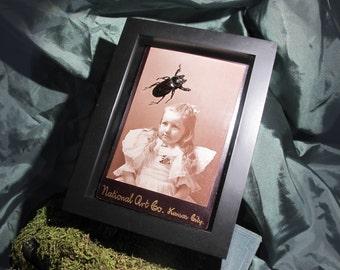 Child and Beetle Framed Entemology Display