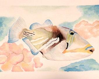 Humunukunukuapa'a - Original Watercolor