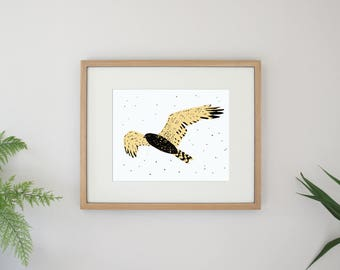Hawk Bird Illustration Flying Bird Archival Art Print