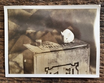Original Vintage Photograph A Mouse & His Cheese