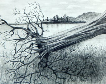 Uprooted, 5 x 7 print on 8.5 x 11 65 lb. acid free white matte, signed by me and carefully shipped flat.