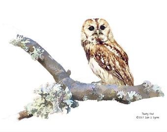 wildlife art, tawny owl print, wildlife print, bird print, wildlife photography, wildlife picture, bird art, wildlife painting, owl wall art