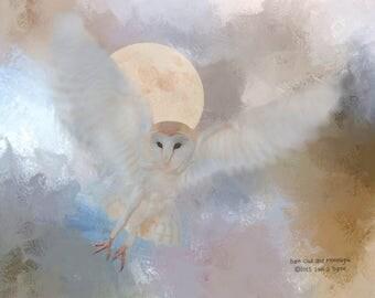 barn owl print, nature print, nature art, owl wall art, wildlife art, wildlife print, wildlife photography, bird print, bird art, owl art