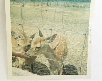 vintage color polaroid photo of hand feeding two fawns behind a fence