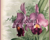 Orchid Floral Download Printable Wall Art Graphic Image