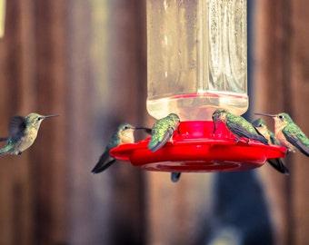 Hummingbirds, Colorado Photography,