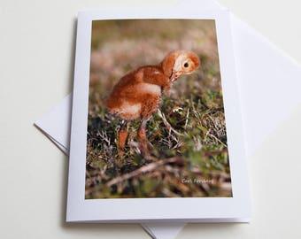 Note Card - Sandhill Crane - Baby