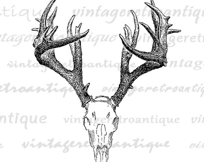picture about Printable Deer Head identified as Printable Deer Skull Impression Deer Electronic Impression Antlers Example Obtain Impression Antique Traditional Clip Artwork Jpg Png Eps HQ 300dpi No.1248