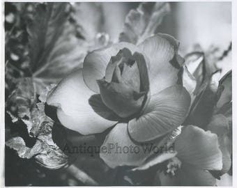 Flower close up vintage art photo