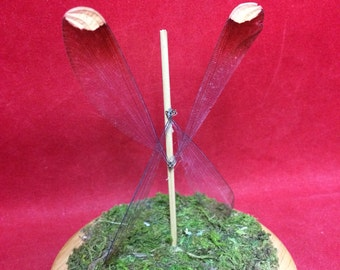 Preserved Fairy Wings--dragonfly-Magical-mythical-garden