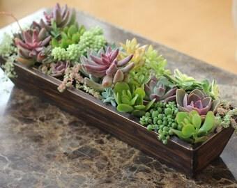 Succulent Centerpiece Arrangement