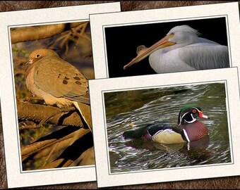 3 Bird Photo Greeting Card Set - Bird Note Card - 5x7 Bird Cards - Blank Note Cards - Bird Greeting Card Handmade (BD11)