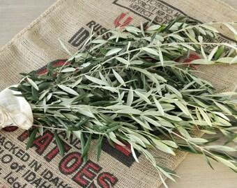 Olive Branch - 8-10 stem ** FREE SHIPPING**