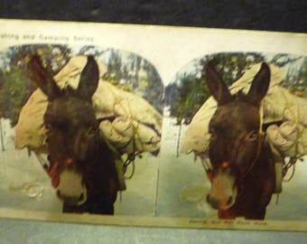 """Steroview card """"Jennie Our Pet Pack Mule"""" from the Hunting Fishing and Camping Series"""