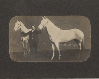 Victorian Cabinet Card Photo ~ man with Horse