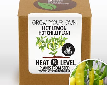 Grow Your Own Hot Lemon Chilli Plant Kit