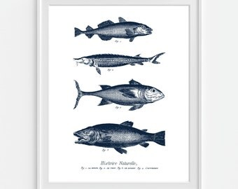 Fish Art Print, Fishing Print, Blue Wall Art, Gift For Father, Mens Gift, Father's Gift, Vintage Reproduction Fish Art