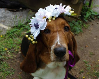 Dog Flower Crown   Flower Crown   White Flower Hair Accessory   Dog Flower Accessory