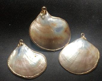 Vintage gold edged Varigated Shells pendants. 1060454