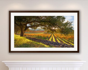 Vineyard Print Panorama Oak Tree Large Napa Valley Photo Autumn Home Decor