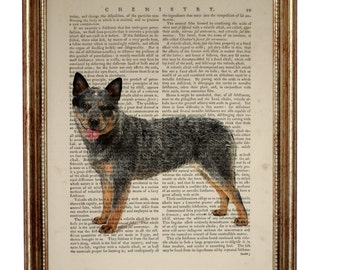 Australian Cattle Dog beautiful Art Print on Upcycled Dictionary Book page 8'' x 10'' inches