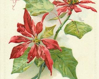 Merry Christmas, Christmas Poinsettia, Poinsettia Merry Christmas, Merry Poinsettia, Card Christmas, Poinsettia Christmas, Poinsettia Flower