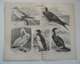 "Chromolithograph, ""Birds III"""