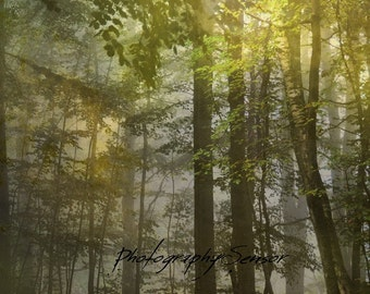 Boreal forest, Summer trees, Landscape of Quebec, Haze, Mystery, Soft, Light, Trees, Forest, Print on Paper Watercolor,