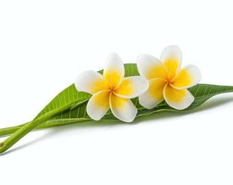 Perfume oil Monoi - fragrance oil - SanSavon scents fragrance