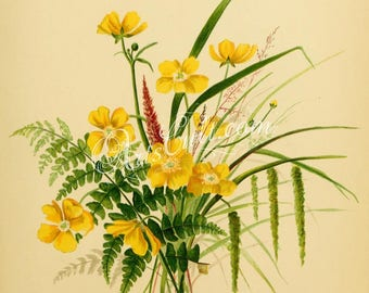 flowers-32467 - Buttercups, Ferns, grass in one bouquet flavor field plants botanical illustration yellow flowers digital download picture