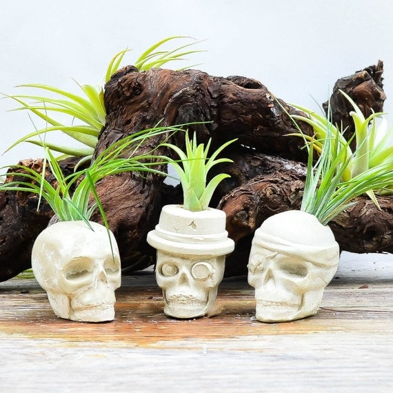 Concrete skull planter air plant kit skull air plant holder for Air plant holder ideas