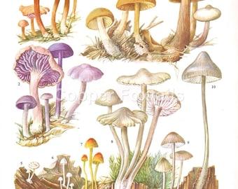 1960's Kitchen Print, Kitchen Decor, Kitchen Wall Art, Kitchen Print, Kitchen Lithograph, Kitchen Illustration, Wall Art, Vintage Prints
