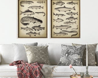 FISH PRINT SET of 2 Fish Charts, Fish Poster, Fish Illustration, Vintage Marine Decor, Beach Wall Decor, Marine life Art, Sea Life, Fisher