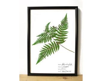 Fern botanical print - Botanical wall art - Herbarium - Nature lover gift - Fern print - Botanical illustration