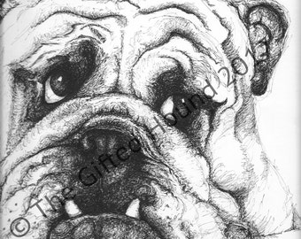 Custom portrait/gift Old Tyme Bulldog, pen and ink portrait