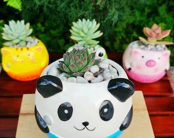 Panda succulent planter - DiY Kit - mini planter - succulent pot - ceramic pot - home decor - kids nursery (FREE charm, pick, succulent)