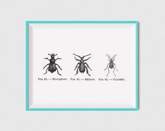 Insect Art Print Vintage Insect Poster, Antique Insect Prints, Bugs Poster Printable Insect Wall Art, Insect Artwork Bugs Art, Bugs Prints