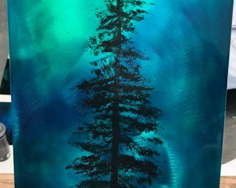 Kenai Northern Lights Spruce